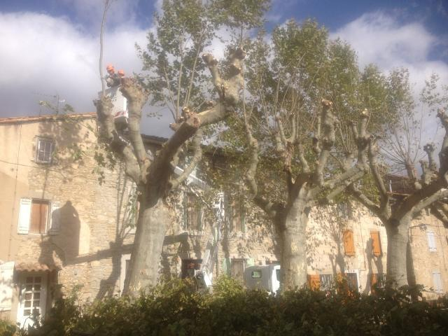elagage-place-veille-octobre-2014
